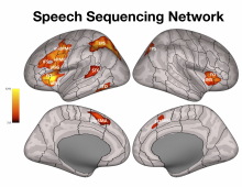 speech-network